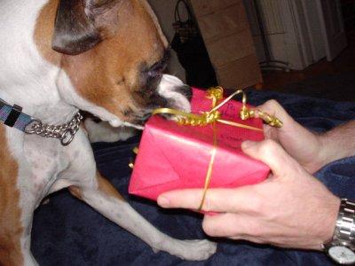 Dog vs Present