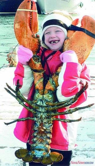 Very Big Lobster
